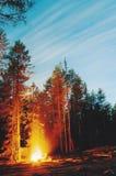 Het vuur van de toerist in het nachtbos. Stock Foto's