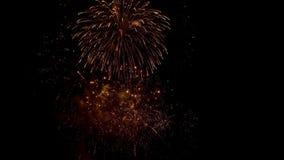 Het vuurwerk explodeert met multi-colored lichten in donkere hemel stock footage