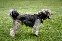 Het wachten hond Royalty-vrije Stock Foto