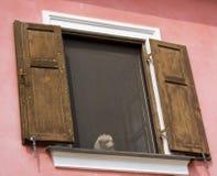 Het wachten hond Stock Fotografie