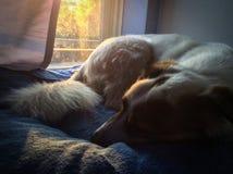 Het wachten hond Royalty-vrije Stock Afbeeldingen