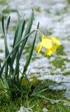 Het wachten op de lente Royalty-vrije Stock Fotografie