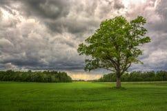Het wachten op de regen Royalty-vrije Stock Foto's