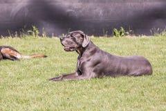 Het wachten op een nieuwe eigenaar in een dier stock fotografie
