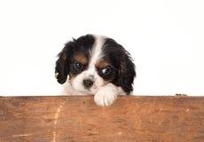 Het wachten puppy stock afbeeldingen