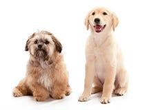Het wachten Puppy stock foto