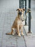 Het wachten van de hond royalty-vrije stock foto's