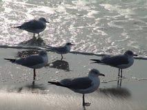 Het wachten van zeemeeuwen stock afbeelding