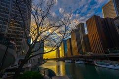 Het wandelen in Chicago stock foto