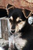 Het wantrouwige puppy. stock afbeeldingen