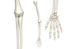 Het wapen van het skelet stock illustratie