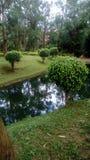 het ware die groen door een meer van groene kleur wordt gekruist Stock Fotografie