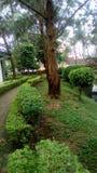Het ware groen van een tuin in Kameroen in Afrika Royalty-vrije Stock Afbeelding