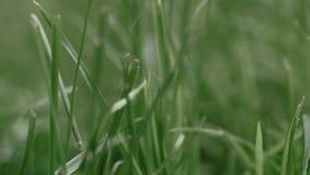 Het warme de zomerzon lichte glanzen door wild grasgebied stock footage
