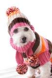 Het warme hond gebreid dragen beanie en verbindingsdraad royalty-vrije stock foto's
