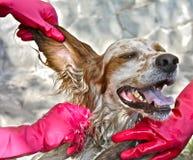 Het wassen van de hond Stock Foto's