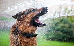 Het wassen van de hond royalty-vrije stock foto