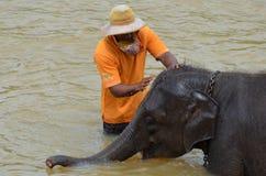 Het wassen van een babyolifant bij Pinnawala-Olifantsweeshuis, Sri Lanka Royalty-vrije Stock Foto's