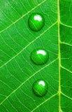 Het water daalt op een Groen Blad/een Super Macro Stock Foto