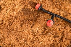 Het water die is op de droge grond in de boompot voor voorbereidingen treft wa druipen Stock Afbeeldingen