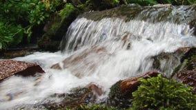 Het water die van de bergrivier op de stenen stromen Forest Splatter stock videobeelden
