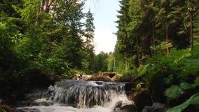 Het water die van de bergrivier op de stenen stromen Forest Splatter stock video