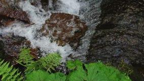 Het water die van de bergrivier op de stenen stromen Forest Splatter stock footage