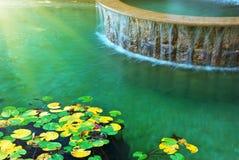 Het water en doorbladert van waterlelie Royalty-vrije Stock Fotografie