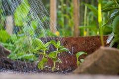 Het water geven de nieuwe groei royalty-vrije stock afbeelding