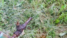 Het water geven in de Tuin stock video