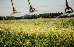 Het water geven gebied Stock Fotografie