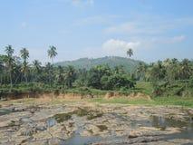Het water geven in Pinnawala Royalty-vrije Stock Foto's