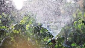 Het water geven tuinaard stock footage