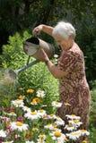 Het water geven van bloemen met kan Stock Foto's