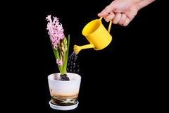 Het water geven van de bloem Royalty-vrije Stock Foto