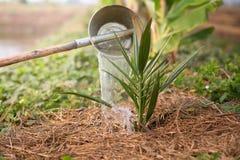 Het water geven van de datum-palm Royalty-vrije Stock Foto