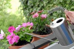 Het water geven van de persoon bloemen Stock Foto