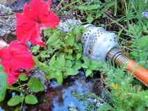 Het water geven van de Tuin met de Oude Waterwasfles Royalty-vrije Stock Afbeeldingen