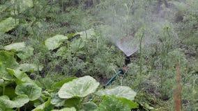 Het water geven van de tuin met spuitbus stock footage