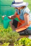 Het water geven van de vrouw installaties in tuin Royalty-vrije Stock Afbeelding