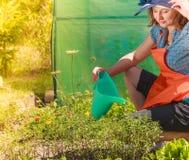 Het water geven van de vrouw installaties in tuin Stock Afbeeldingen