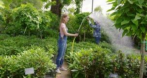 Het water geven van de vrouw installaties in tuin stock footage