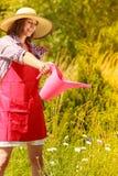 Het water geven van de vrouw installaties in tuin Stock Fotografie