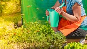 Het water geven van de vrouw installaties in tuin Stock Foto