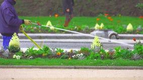 Het water geven van een bloemgazon in het park stock video