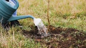 Het water geven van een gieter van een jonge boom stock videobeelden