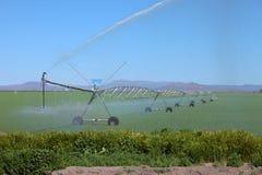 Het water geven van een luzernegebied, Zuid-Oregon. Royalty-vrije Stock Foto's