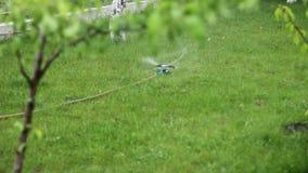 Het water geven van gras in de werf 1080p stock footage