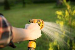 Het water geven van groene boom met slang Het tuinieren concept Stock Foto's