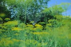 Het water geven van het gras Royalty-vrije Stock Afbeelding